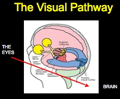 functional assessment of vision