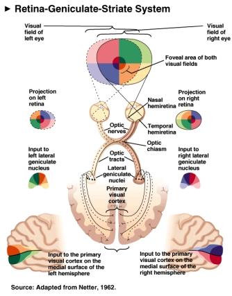 Vnov072i on Right Side Brain Stroke
